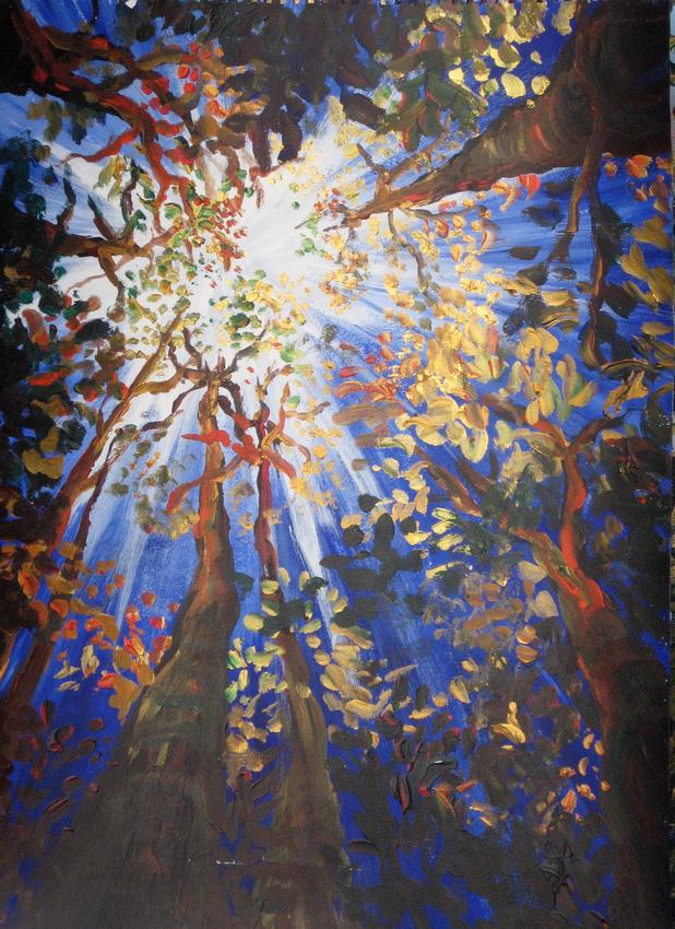 Sunburst Tree Canopy